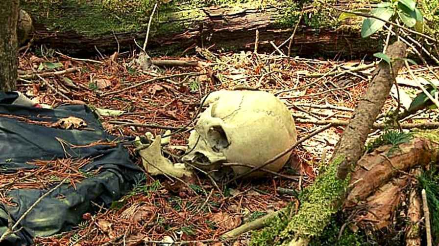 aokigahara a haunted forest